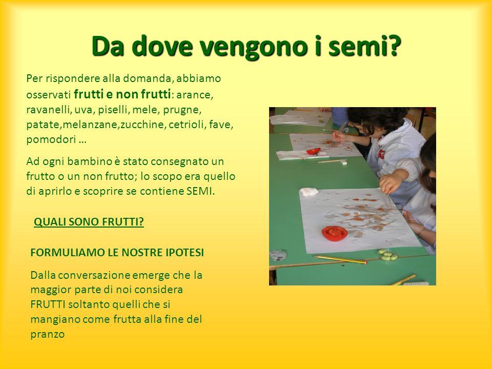 Da dove vengono i semi? Per rispondere alla domanda, abbiamo osservati frutti e non frutti : arance, ravanelli, uva, piselli, mele, prugne, patate,mel