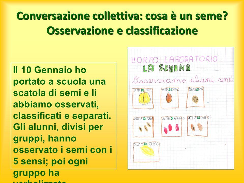Conversazione collettiva: cosa è un seme? Osservazione e classificazione Il 10 Gennaio ho portato a scuola una scatola di semi e li abbiamo osservati,
