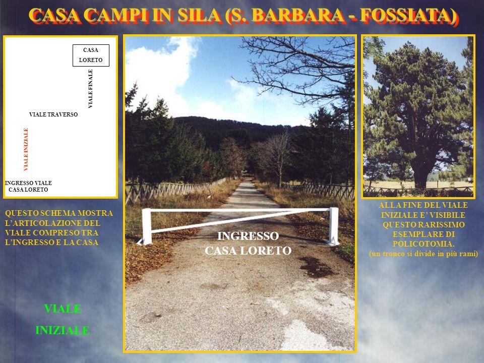 MENU CAMPO PER I GIOCHI CASA CAMPI IN SILA (S. BARBARA- FOSSIATA) CASA CAMPI IN SILA (S. BARBARA - FOSSIATA)