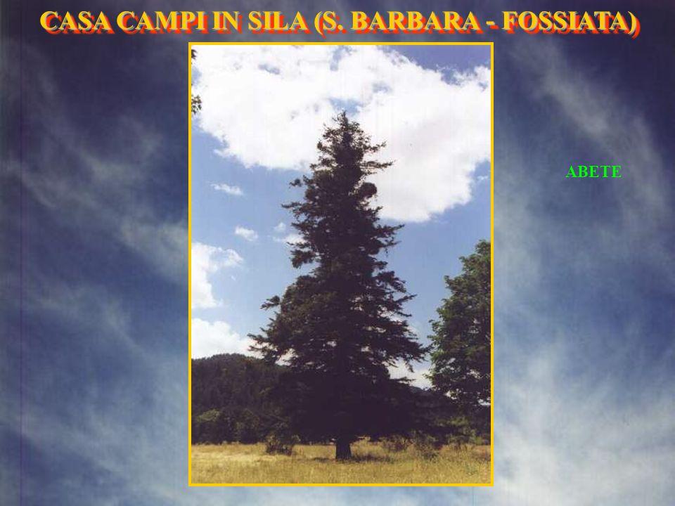 FONTANINA ESTERNA CASA CAMPI IN SILA (S. BARBARA- FOSSIATA) CASA CAMPI IN SILA (S. BARBARA - FOSSIATA)