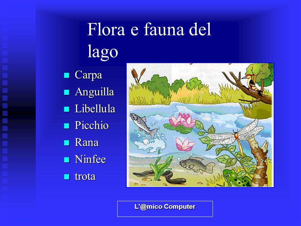 L@mico Computer Flora e fauna del lago Carpa Carpa Anguilla Anguilla Libellula Libellula Picchio Picchio Rana Rana Ninfee Ninfee trota trota