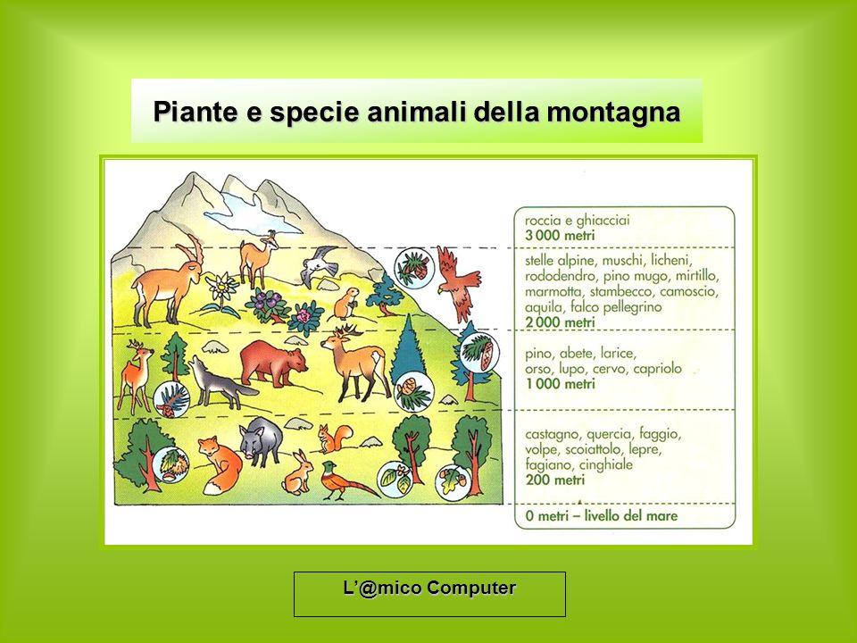 L@mico Computer Piante e specie animali della montagna