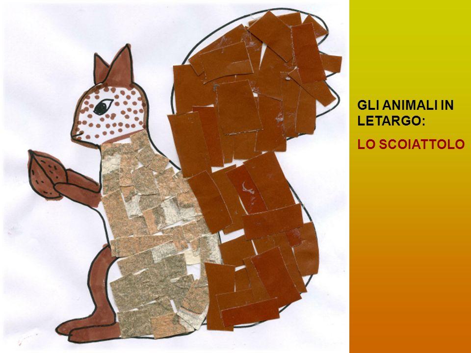 GLI ANIMALI IN LETARGO: LO SCOIATTOLO