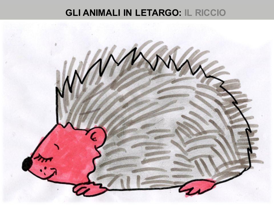 GLI ANIMALI IN LETARGO: IL RICCIO