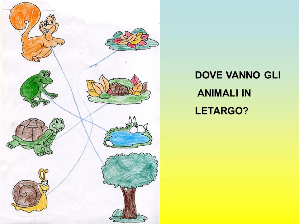 DOVE VANNO GLI ANIMALI IN LETARGO?
