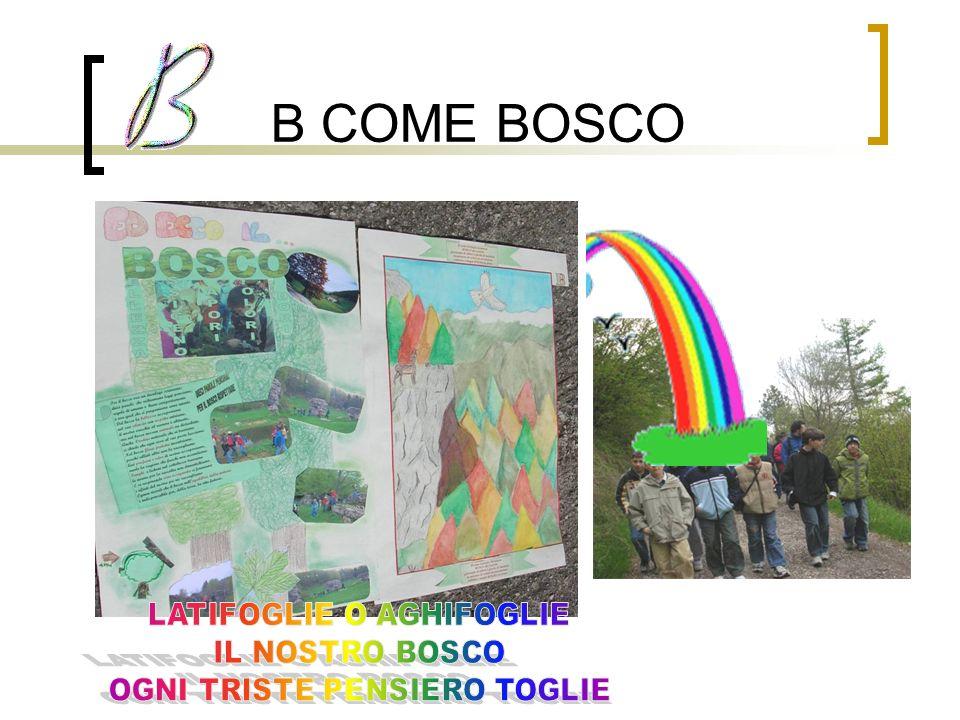 B COME BOSCO