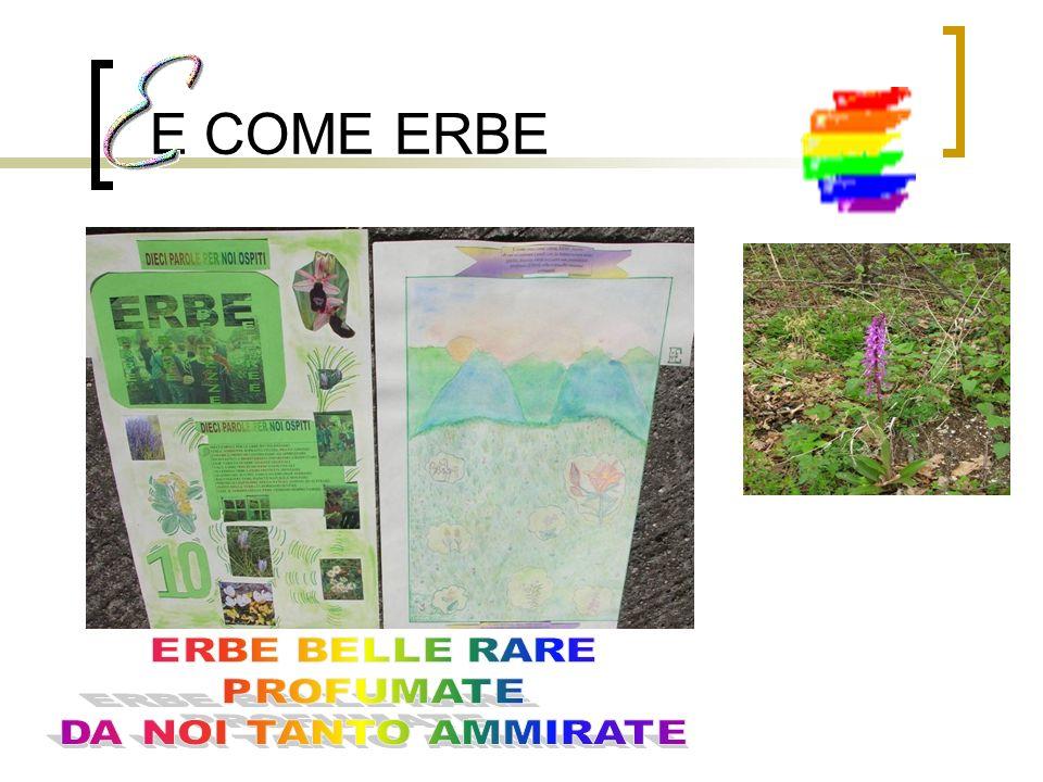E COME ERBE