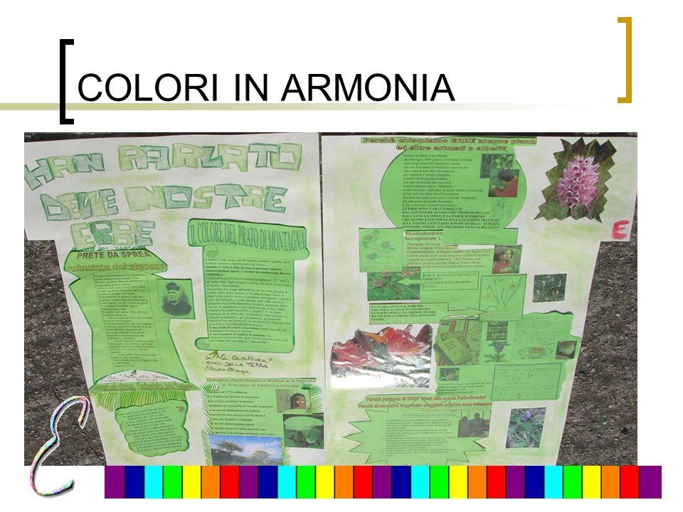 COLORI IN ARMONIA