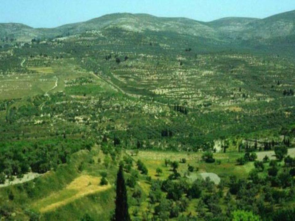 La Samaria: in posizione centrale con montagne degradanti dolcemente, ricca di pascoli, di ampie valli coltivate e con la vasta pianura di Esdrelon, f