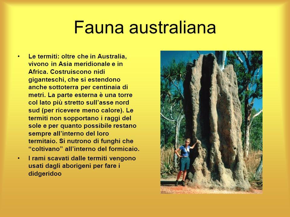 Fauna australiana Le termiti: oltre che in Australia, vivono in Asia meridionale e in Africa. Costruiscono nidi giganteschi, che si estendono anche so