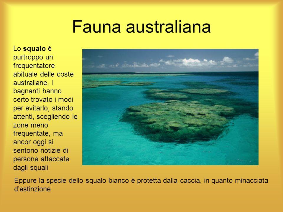 Lo squalo è purtroppo un frequentatore abituale delle coste australiane. I bagnanti hanno certo trovato i modi per evitarlo, stando attenti, scegliend