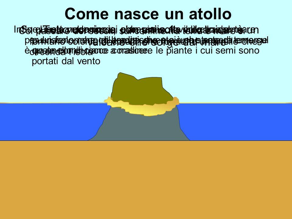 Come nasce un atollo Tutto comincia con unisola vulcanica: è un vulcano che sorge dal mare Col passare dei secoli, sul confine fra terra e mare si for