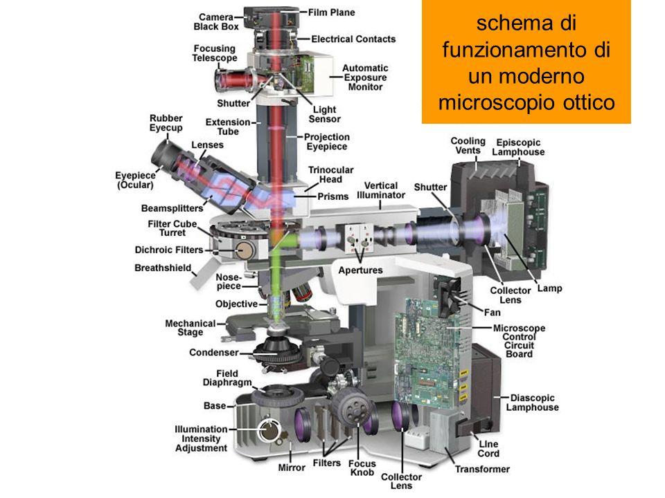 bx51 interior schema di funzionamento di un moderno microscopio ottico