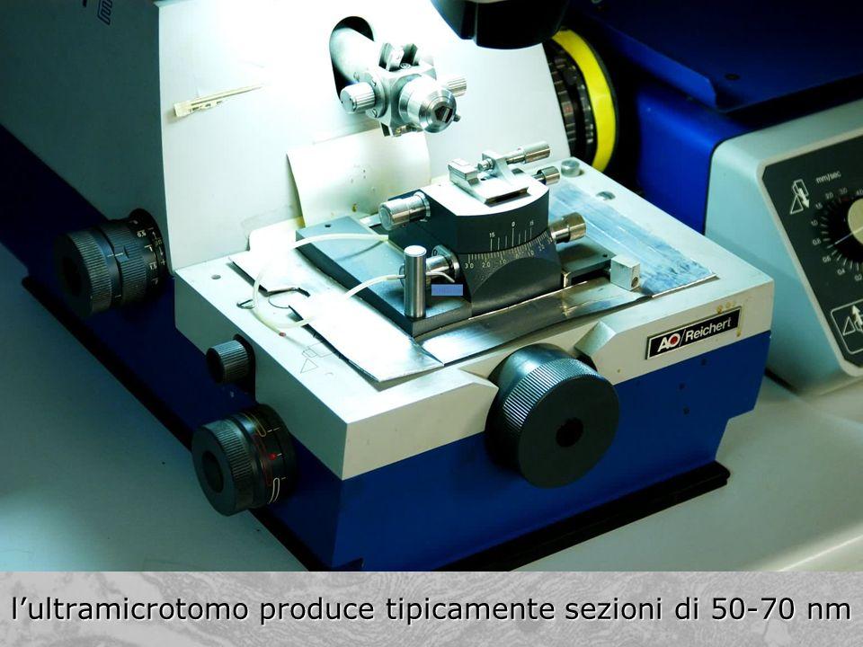 lultramicrotomo produce tipicamente sezioni di 50-70 nm