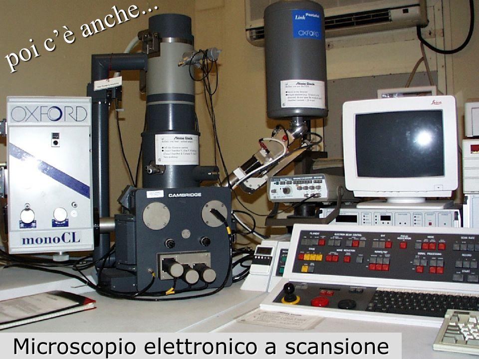 poi cè anche... Microscopio elettronico a scansione