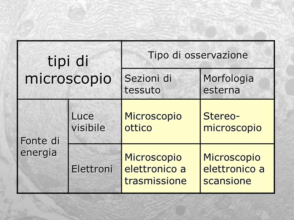 tipi di microscopio Tipo di osservazione Sezioni di tessuto Morfologia esterna Fonte di energia Luce visibile Microscopio ottico Stereo- microscopio E