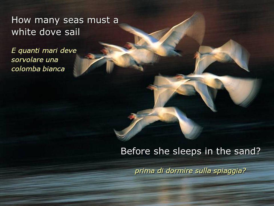 How many seas must a white dove sail E quanti mari deve sorvolare una colomba bianca Before she sleeps in the sand.