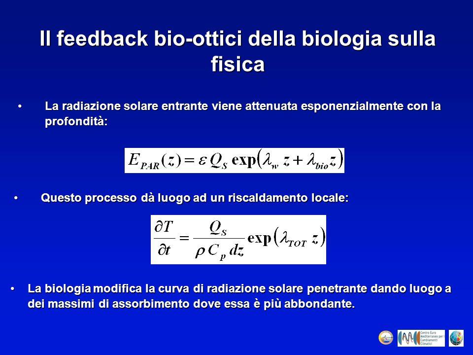 Il feedback bio-ottici della biologia sulla fisica Questo processo dà luogo ad un riscaldamento locale:Questo processo dà luogo ad un riscaldamento lo