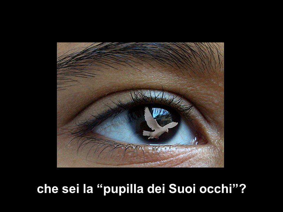 che sei la pupilla dei Suoi occhi?