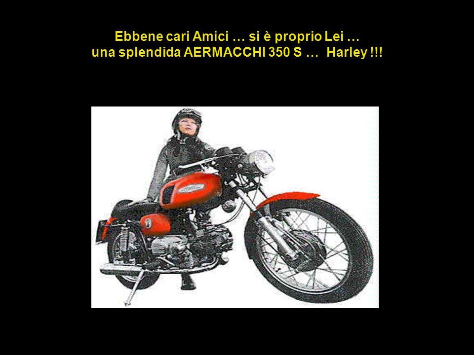 Ebbene cari Amici … si è proprio Lei … una splendida AERMACCHI 350 S … Harley !!!