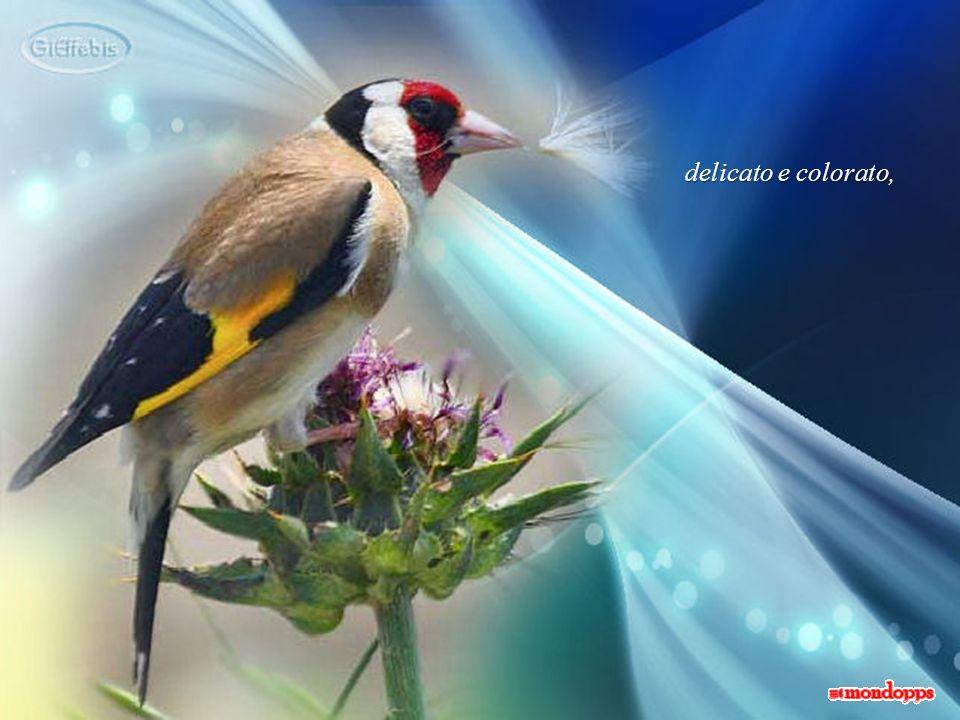Soltanto nel tempo compresi che quegli uccellini, così piccoli, fragili e delicati, mi avevano dato una grandissima lezione:
