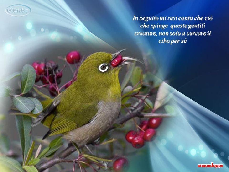 E, come agli uccellini, anche tra umani deve essere offerta porgendola nellincavo della mano aperta, senza alcuna costrizione, o sopraffazione e nel pieno rispetto delle scelte di ognuno: