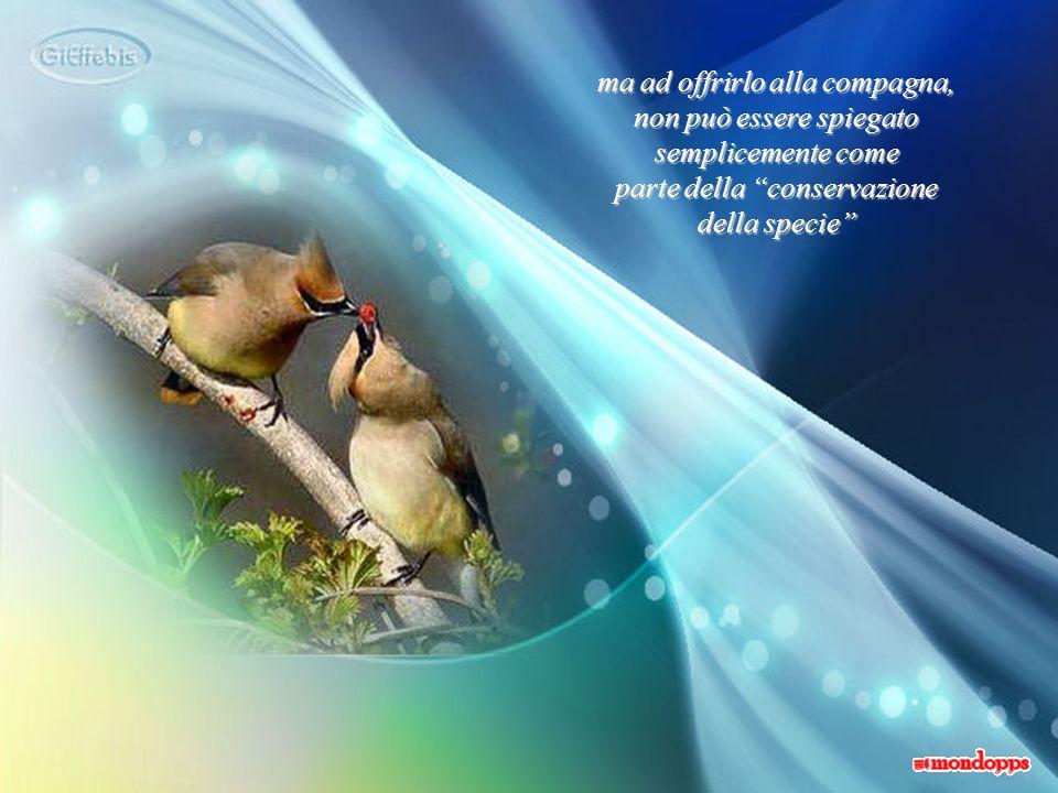 ma ad offrirlo alla compagna, non può essere spiegato semplicemente come parte della conservazione della specie