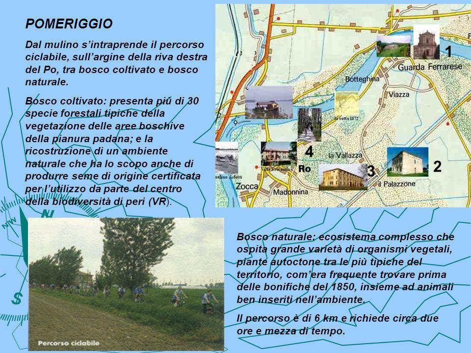 POMERIGGIO Dal mulino sintraprende il percorso ciclabile, sullargine della riva destra del Po, tra bosco coltivato e bosco naturale. Bosco coltivato: