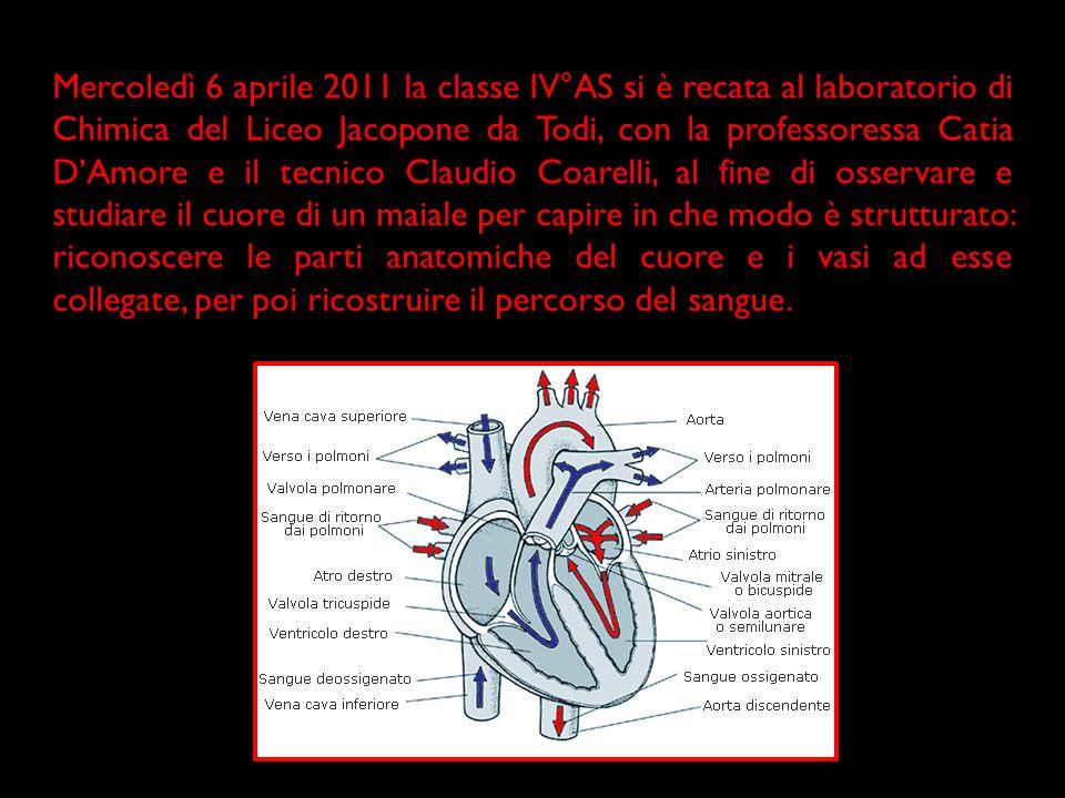 Il ciclo cardiaco che porta il cuore dallo stato di contrazione allo stato di riposo e quindi nuovamente a quello di contrazione è detto rivoluzione cardiaca .