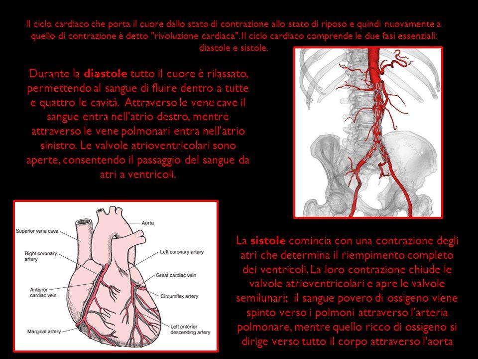 Il ciclo cardiaco che porta il cuore dallo stato di contrazione allo stato di riposo e quindi nuovamente a quello di contrazione è detto