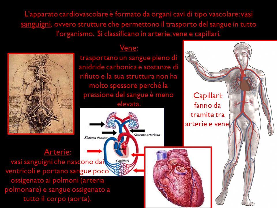 Arterie Arterie : vasi sanguigni che nascono dai ventricoli e portano sangue poco ossigenato ai polmoni (arteria polmonare) e sangue ossigenato a tutt