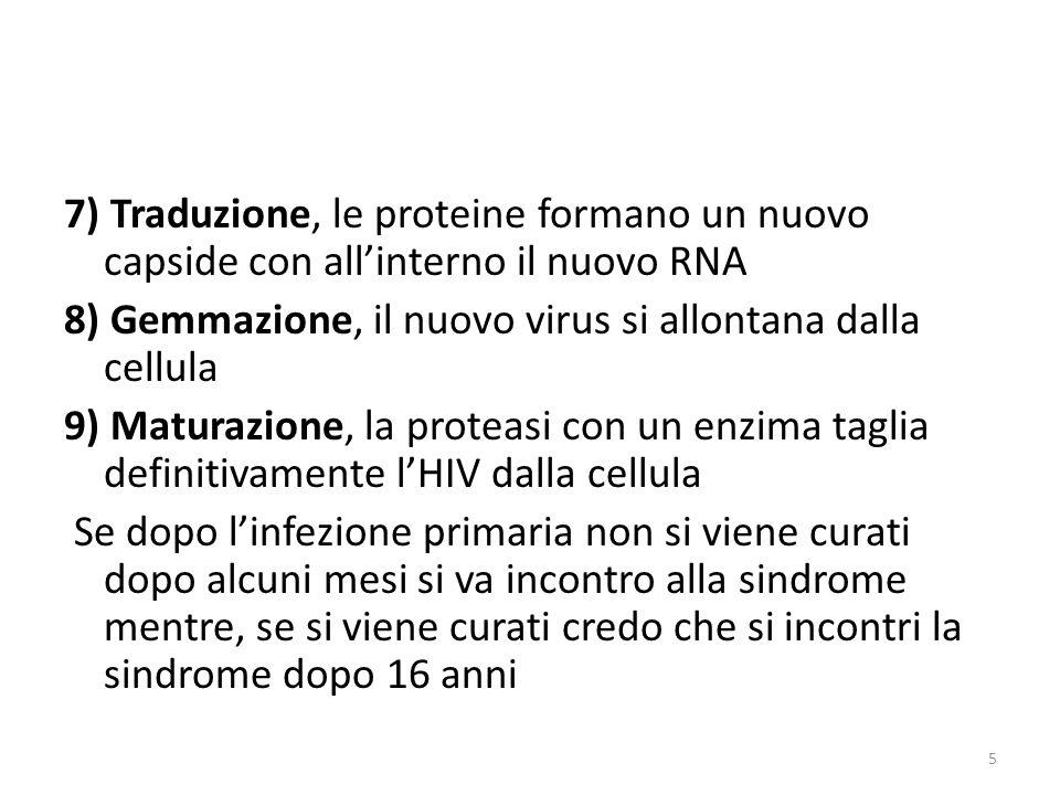 7) Traduzione, le proteine formano un nuovo capside con allinterno il nuovo RNA 8) Gemmazione, il nuovo virus si allontana dalla cellula 9) Maturazione, la proteasi con un enzima taglia definitivamente lHIV dalla cellula Se dopo linfezione primaria non si viene curati dopo alcuni mesi si va incontro alla sindrome mentre, se si viene curati credo che si incontri la sindrome dopo 16 anni 5
