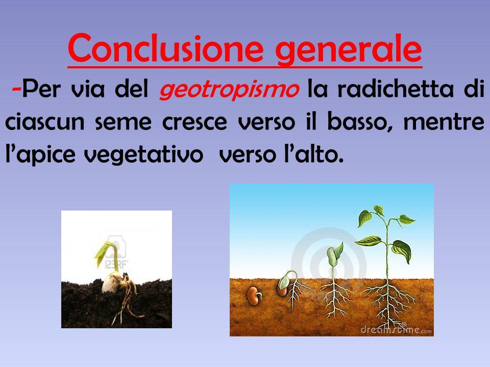 Solo i semi, posti in condizioni adatte, sono germinati prosperosi!!!