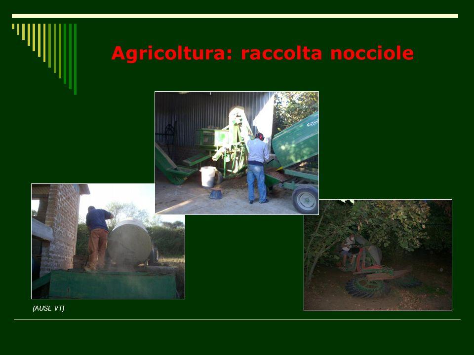 Agricoltura: raccolta nocciole