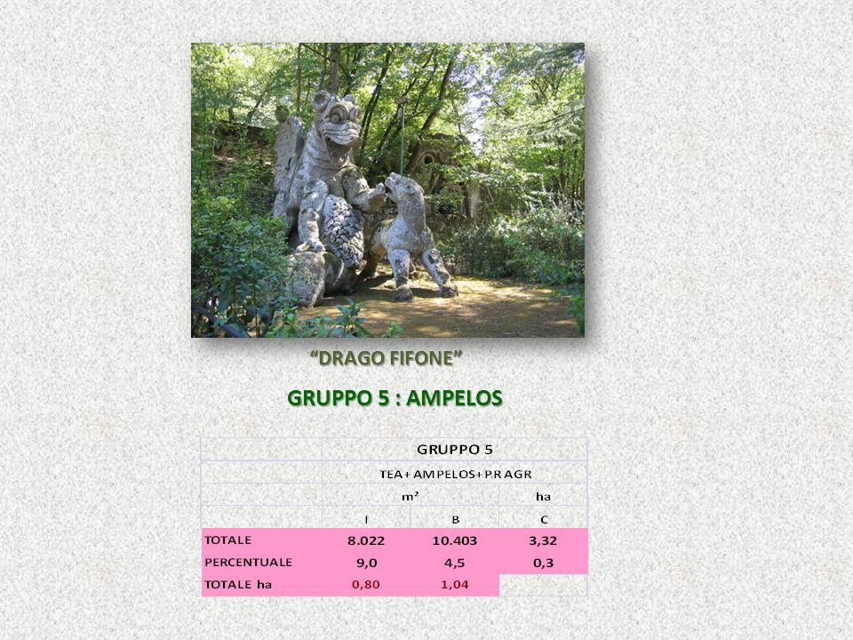 DRAGO FIFONE GRUPPO 5 : AMPELOS