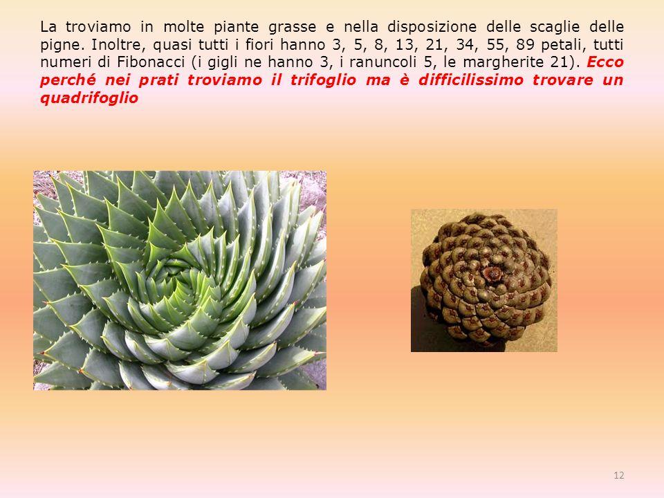 La troviamo in molte piante grasse e nella disposizione delle scaglie delle pigne.