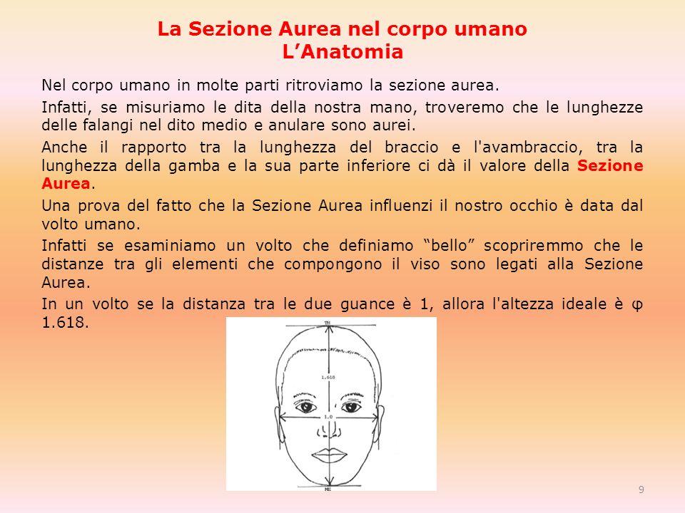 La Sezione Aurea nel corpo umano LAnatomia Nel corpo umano in molte parti ritroviamo la sezione aurea.