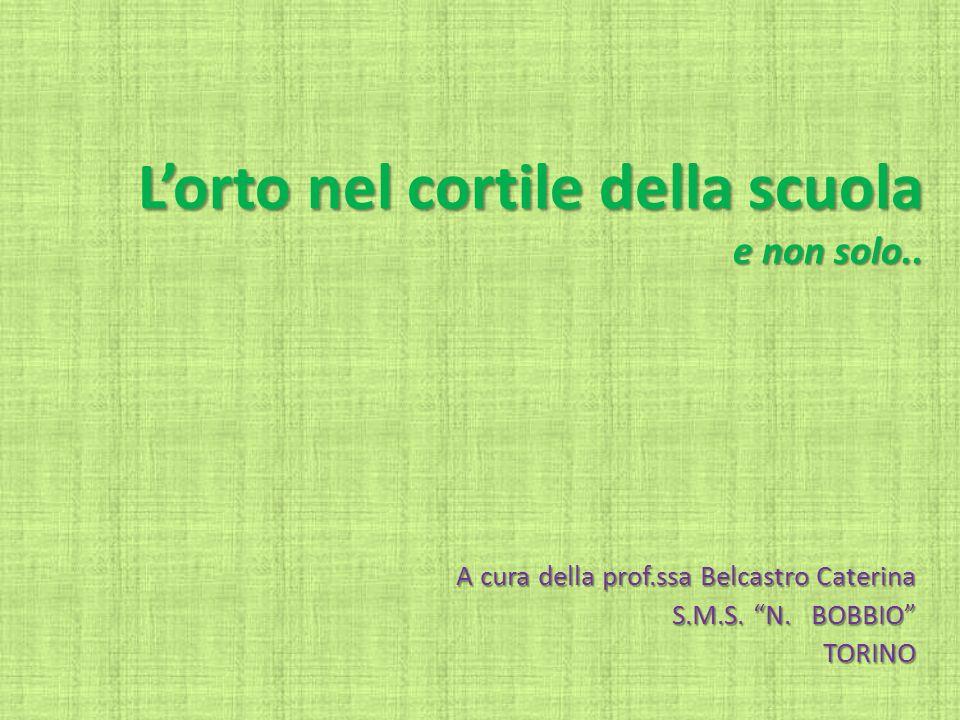 Lorto nel cortile della scuola e non solo.. A cura della prof.ssa Belcastro Caterina S.M.S. N. BOBBIO TORINO