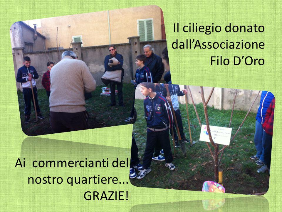 Il ciliegio donato dallAssociazione Filo DOro Ai commercianti del nostro quartiere... GRAZIE!