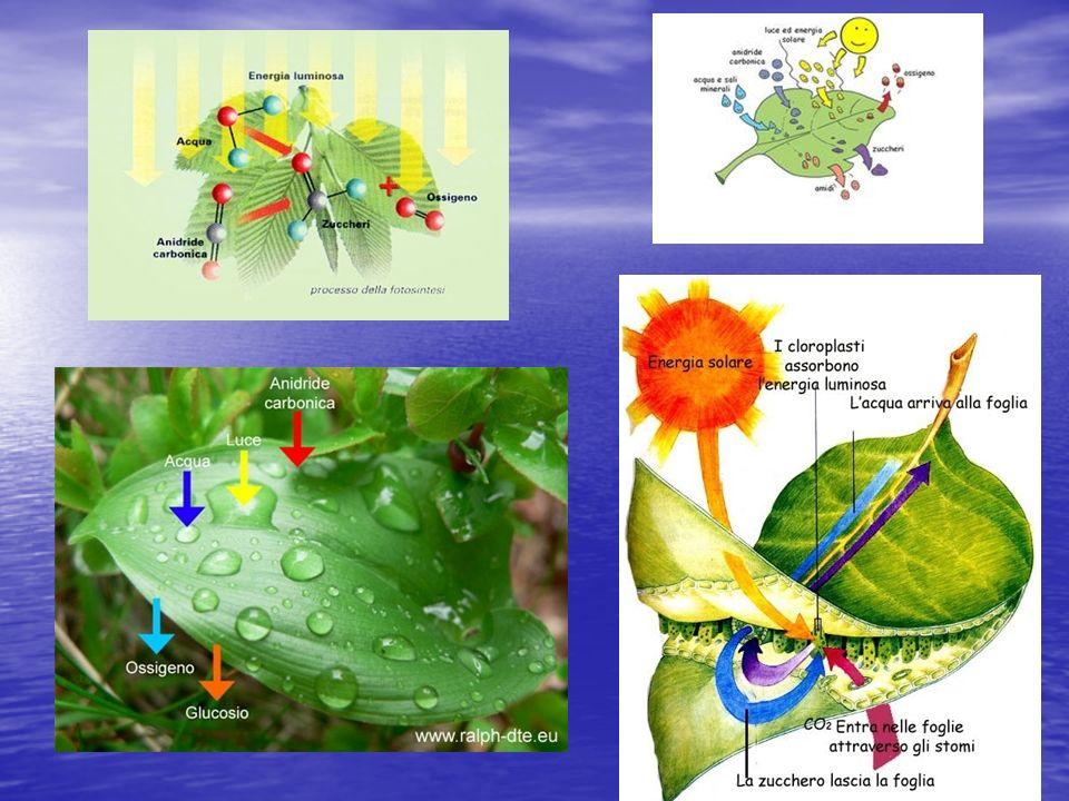 Struttura dei virus La particella virale - quando si trova in sede extracellulare - è detta virione (da non confondersi con vibrione, termine riferito ai batteri del genere Vibrio, tra cui il colera); quando invece si trova in una fase di attiva replicazione endocellulare è chiamata virus.