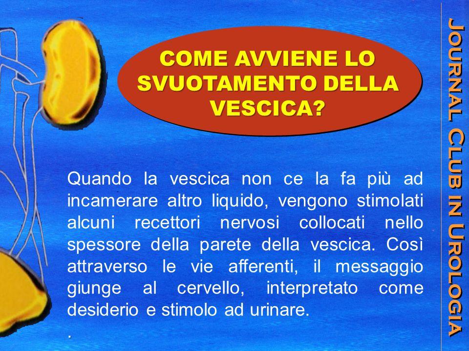 Journal Club in Urologia La vescica riceve lurina dagli ureteri e la trattiene.