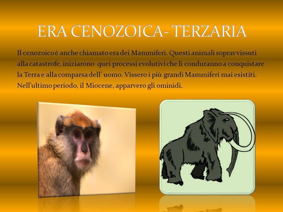 Il cenozoico è anche chiamato era dei Mammiferi. Questi animali sopravvissuti alla catastrofe, iniziarono quei processi evolutivi che li conduranno a