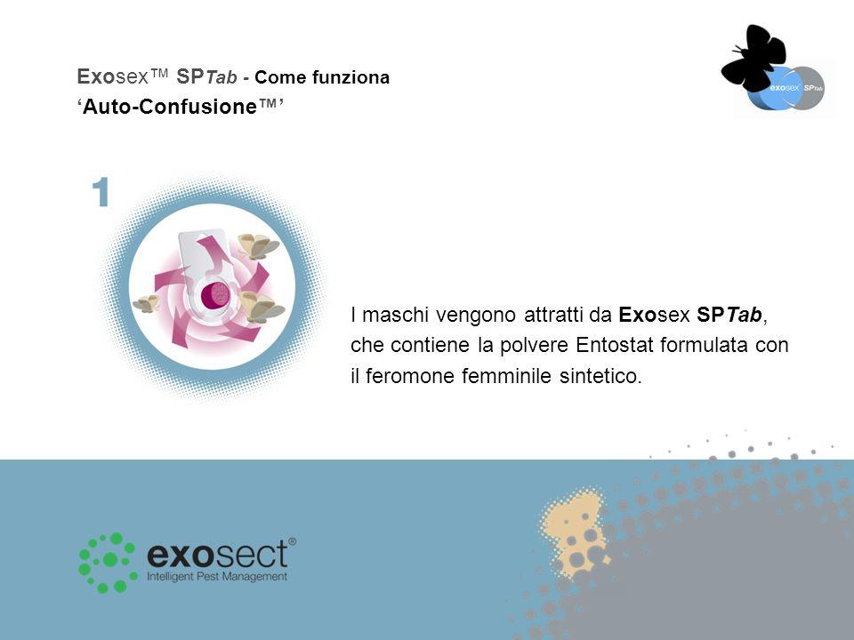 I maschi vengono attratti da Exosex SPTab, che contiene la polvere Entostat formulata con il feromone femminile sintetico.
