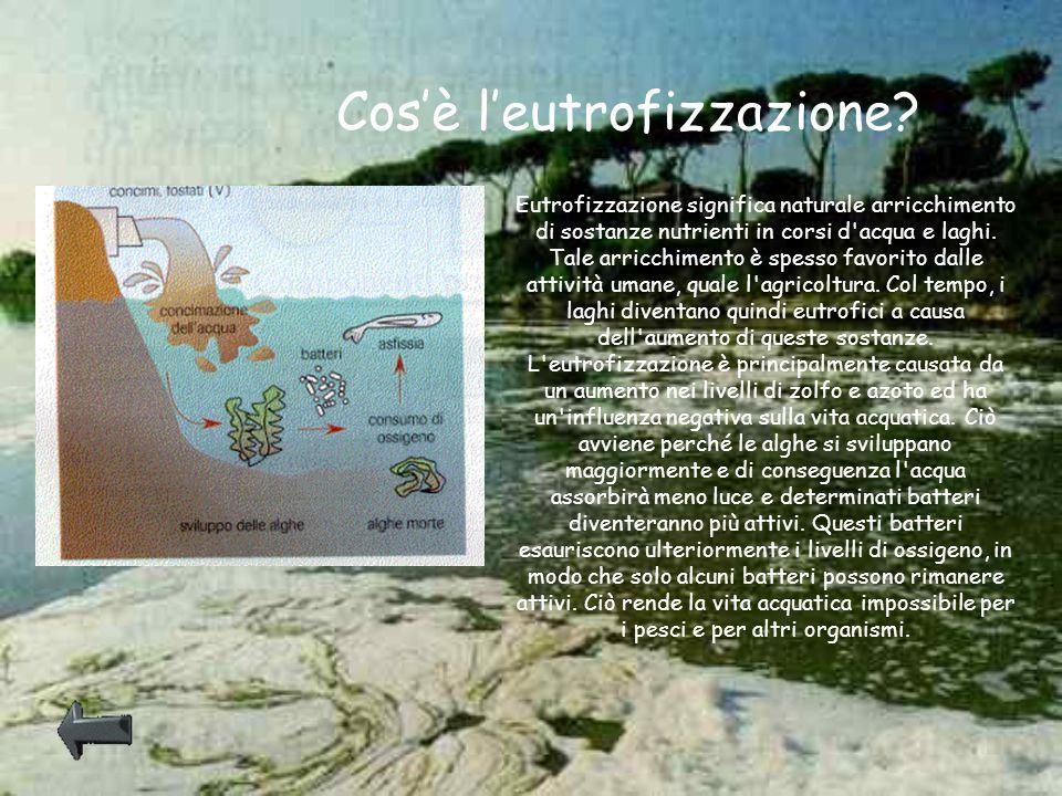 Eutrofizzazione significa naturale arricchimento di sostanze nutrienti in corsi d'acqua e laghi. Tale arricchimento è spesso favorito dalle attività u