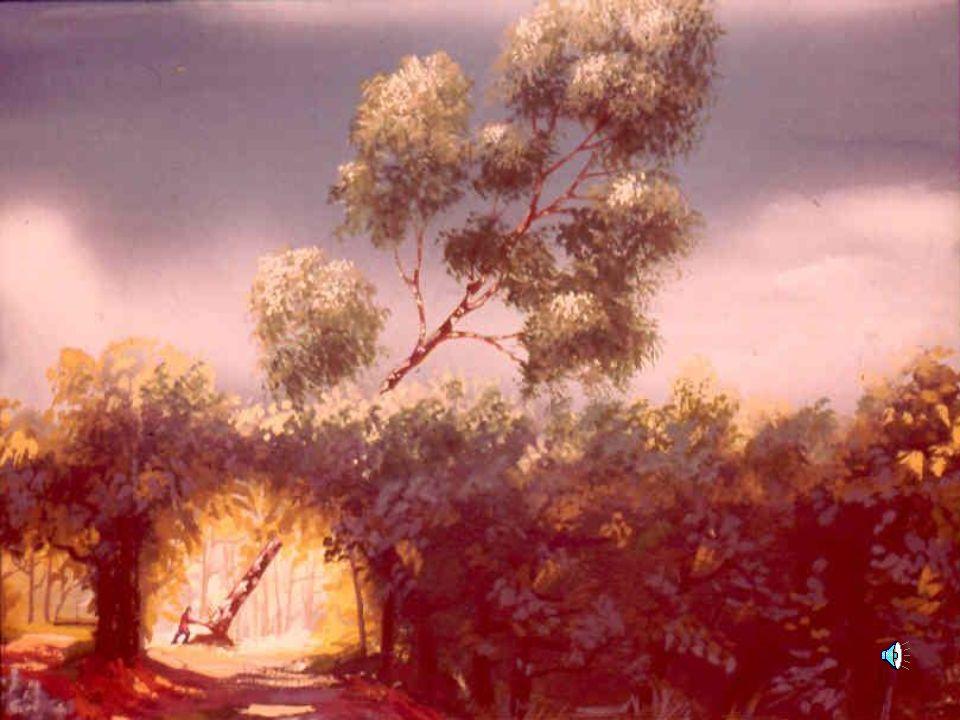02/03/201446... che poco dopo l'albero si abbatté in un rovinio di fronde in mezzo al bosco.