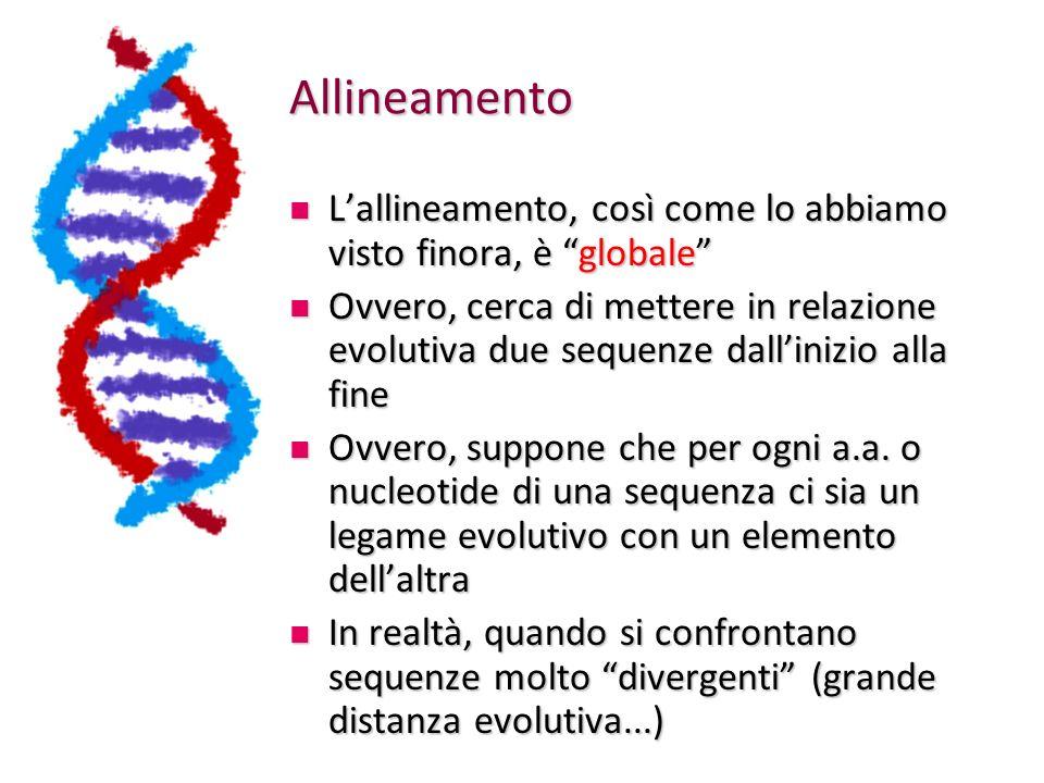 Allineamento Lallineamento, così come lo abbiamo visto finora, è globale Lallineamento, così come lo abbiamo visto finora, è globale Ovvero, cerca di mettere in relazione evolutiva due sequenze dallinizio alla fine Ovvero, cerca di mettere in relazione evolutiva due sequenze dallinizio alla fine Ovvero, suppone che per ogni a.a.
