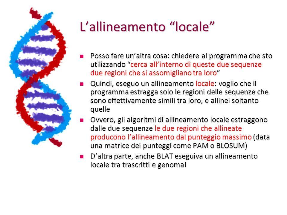 Globale vs locale Lallineamento globale probabilmente non riuscirebbe ad allineare correttamente le due regioni effettivamente simili Lallineamento locale di solito se ne accorge!