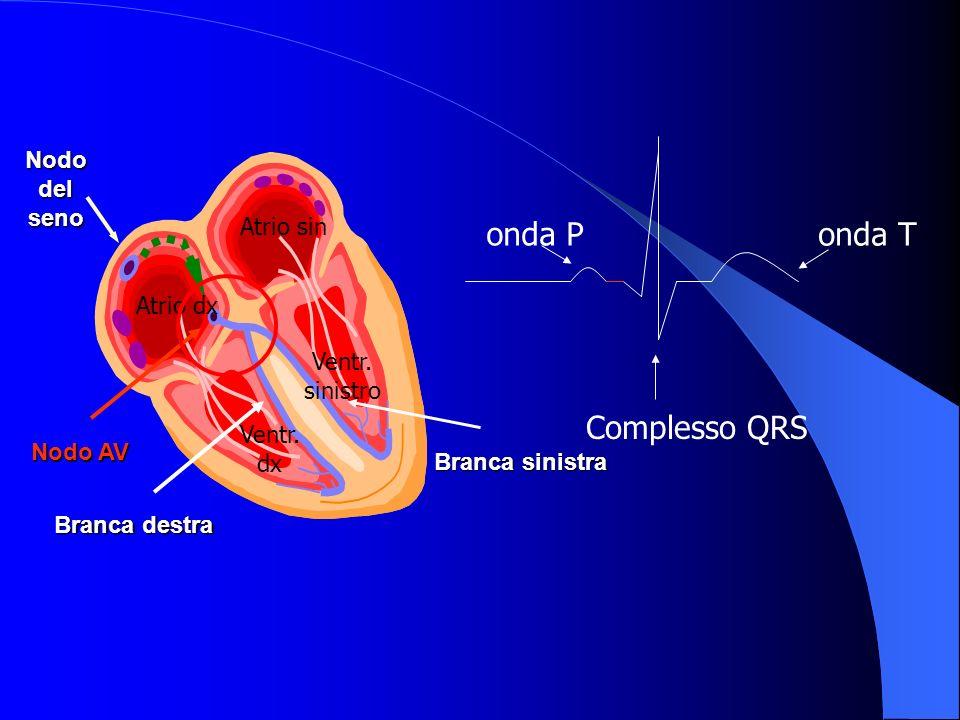 Nodo del seno Nodo AV Branca destra Branca sinistra Atrio dx Atrio sin Ventr.