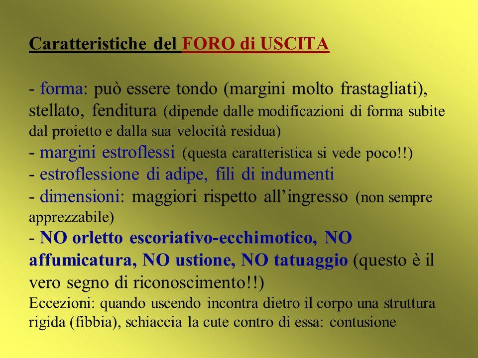 Caratteristiche del FORO di USCITA - forma: può essere tondo (margini molto frastagliati), stellato, fenditura (dipende dalle modificazioni di forma s