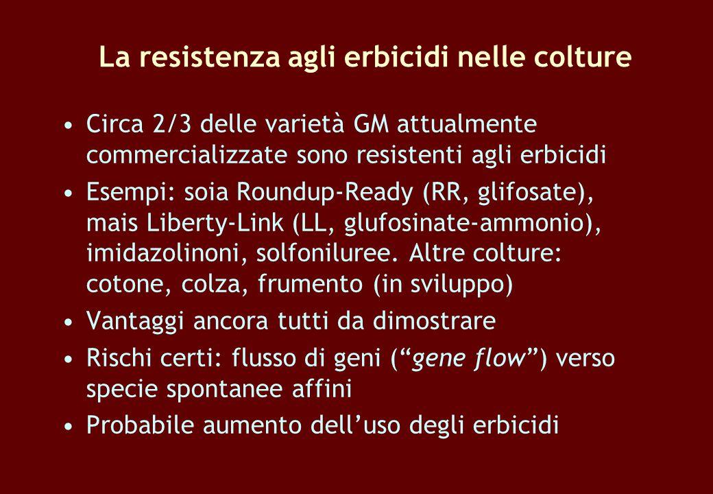 La resistenza agli erbicidi nelle colture Circa 2/3 delle varietà GM attualmente commercializzate sono resistenti agli erbicidi Esempi: soia Roundup-R